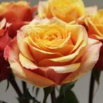 rose_cherry_brandy