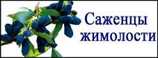 sazhentsy_zhimolosti