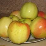 snezhniy kalvil 150x150 - Сорт яблони Кальвиль Снежный