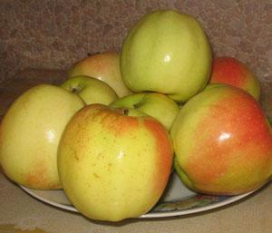 snezhniy kalvil - Сорт яблони Кальвиль Снежный