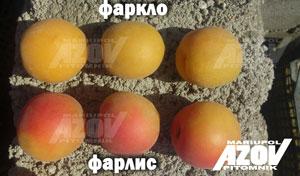 фарлис и фаркло - Абрикос сорт FarcLo (Фаркло)
