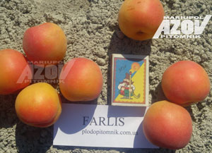 фарлис - Абрикос сорт Farlis (Фарлис)